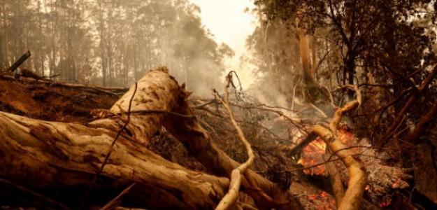 Los incendios no paran en Australia. Foto: Getty